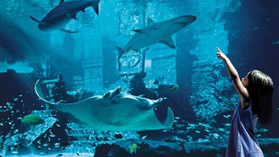 atlantis island paradise caribbean marine habitat
