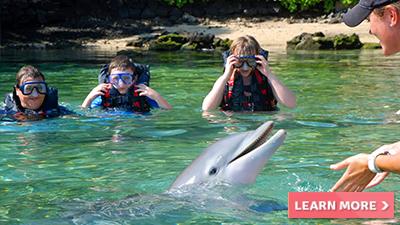 waikoloa village hilton fun things to do dolphins