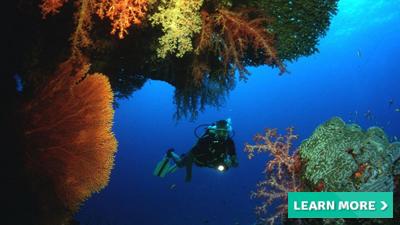 curacao marriott resort beach caribbean best places to scuba dive