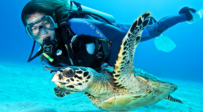 paradise island bahamas fun things to do swim with turtles tourist activities