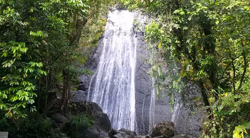 what to do in san juan puerto rico el yunque rainforest half day trip from san juan