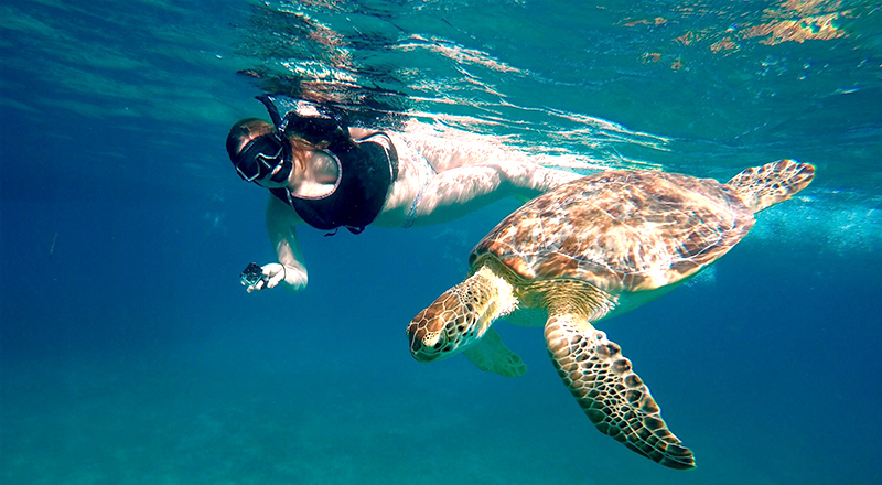 st. thomas best things to do swim with the turtles
