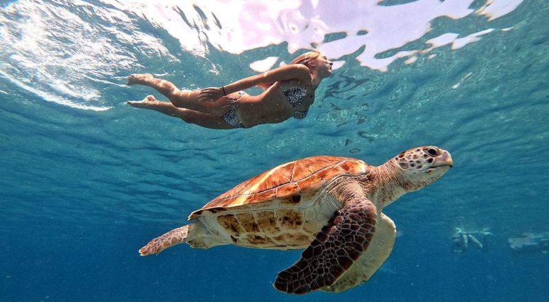 curacao grote knip beach and snorkeling with sea turtles