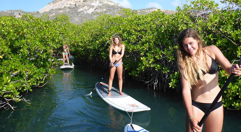 willemstad curacao fun things to do guided paddleboarding sup mangrove eco tour for beginners