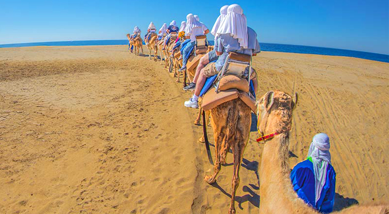 los cabos mexico best things to do camel baja outback adventure from los cabos