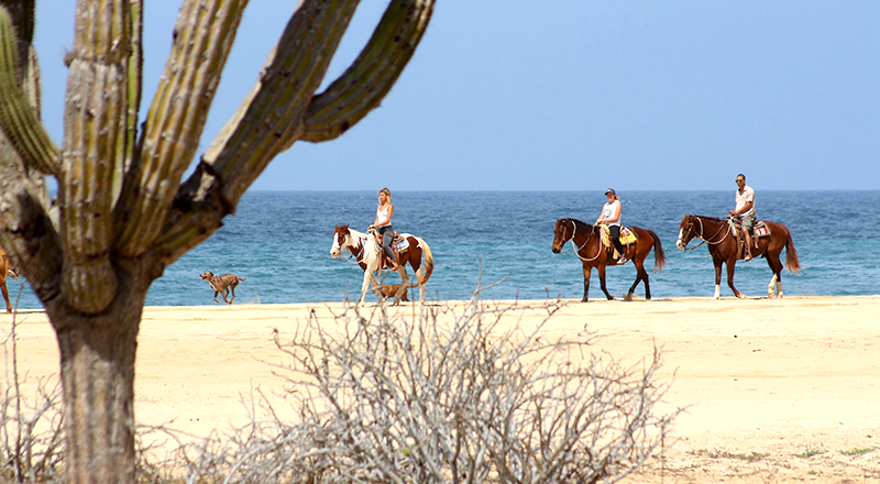 los cabos mexico best things to do pacific horseback riding tour in cabo san lucas