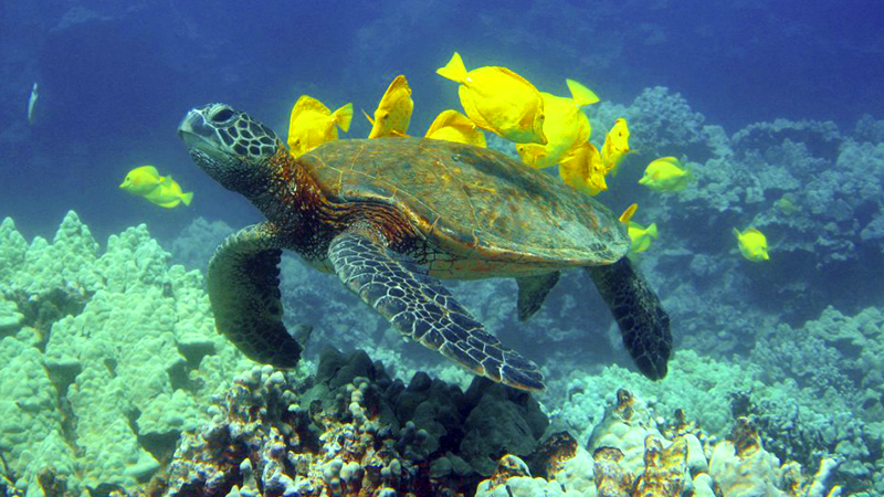 fun things to do in waikoloa village big island snorkel cruise along kohala coast hawaii expedition