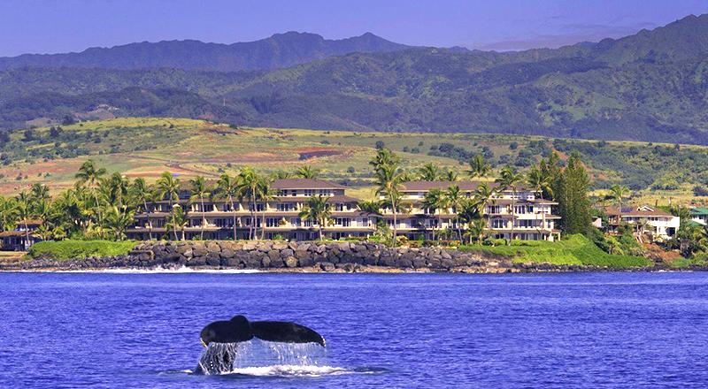 top hotels in koloa whalers cove resort kauai hawaii beachfront escape