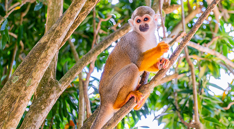 things to do in punta cana monkeyland and plantation safari tour tourism animal zoo site