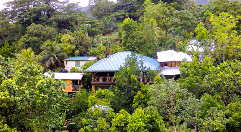 weed-friendly hotels in jamaica zimbali culinary retreats ganja vacation