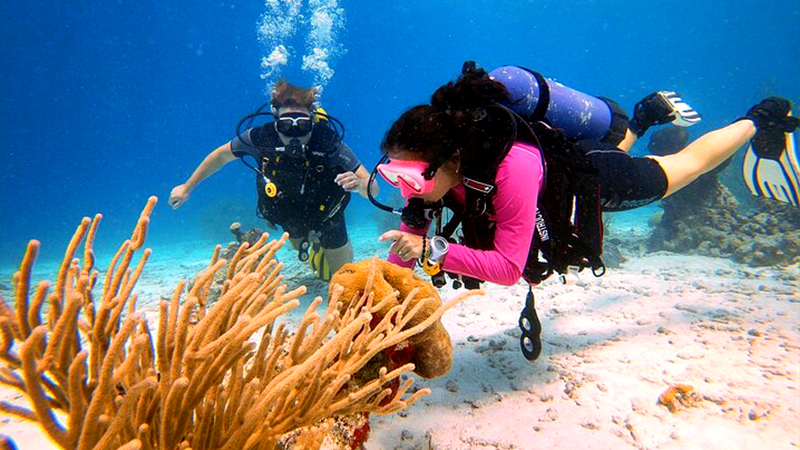 fun things to do in oranjestad aruba discover scuba diving course underwater excursion