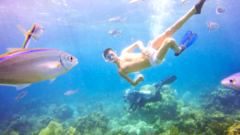 best things to do in la romana dominican republic full-day catalina island snorkeling tour