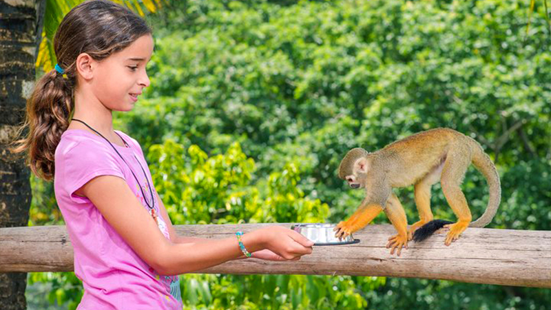 top things to do in la romana dominican republic monkeyland and plantation safari animal tour