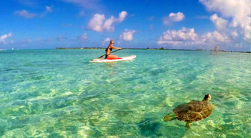 cheap things to do in providenciales turks and caicos islands turtle eco tour paddleboarding expedition