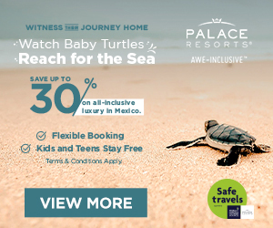 palace resorts baby turtle best caribbean deals