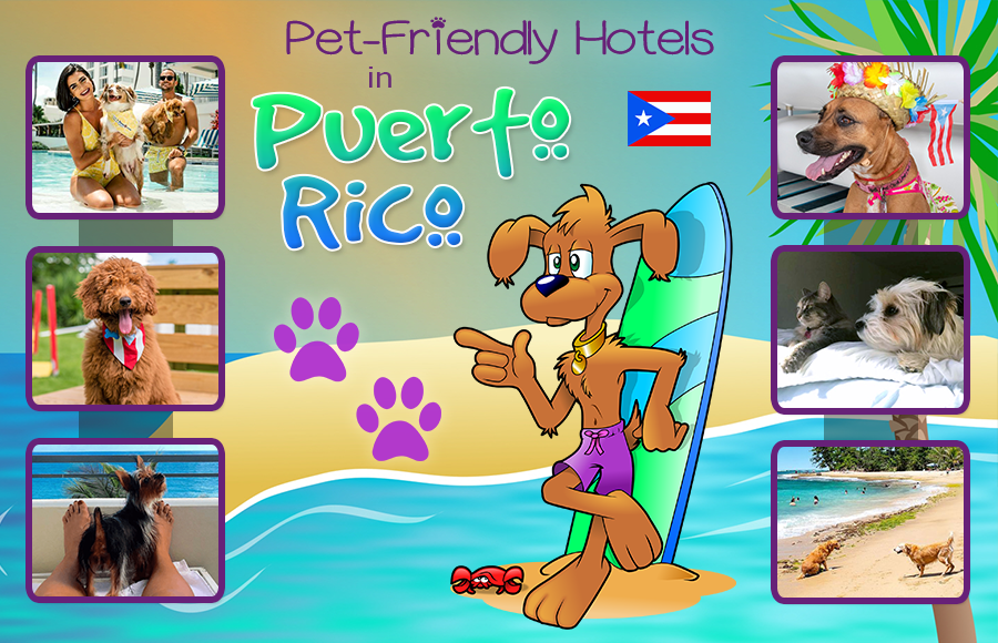 best pet-friendly hotels in puerto rico animal vacation ideas